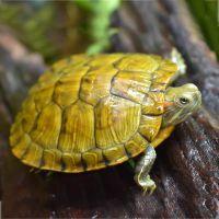 鱼饵乌龟养殖场专用龟粮设备乌龟饲料生产线