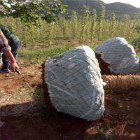 包树网,树根移植网,加固树根保护网