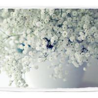 满天星种子四季种易活开花不断净化空气花种子盆栽花卉植物花草籽