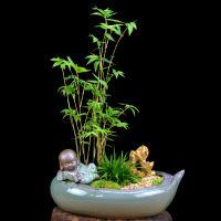 米竹盆栽菖蒲盆景植物室内观赏竹子四季常青净化空气文竹随手香