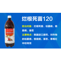 西瓜重茬辣椒番茄桃树梨树苹果树百香果药材白术三七枯萎病烂根死苗120 根腐病