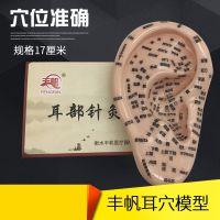 清晰17厘米大耳朵耳部按摩反射区穴位模型刻字穴位准确大号耳模