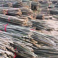批发江西3米4米水竹 竹工艺品原材料小竹子