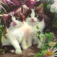厂家定做3D动态小猫立体画 pet光栅板材三维画 高清塑料立体画