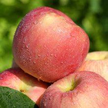 农产品批发-红富士苹果