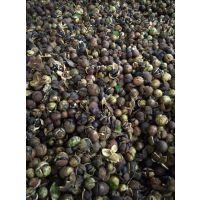 油茶籽烘干机设备厂家,量化生产价格实惠