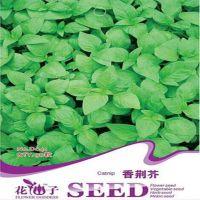 芳香类植物食用蔬菜种子 香荆芥种子(30粒一包)量大按斤批发
