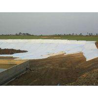 广东长丝复合土工膜 车库顶板绿化用长丝复合土工膜欢迎订购SDI