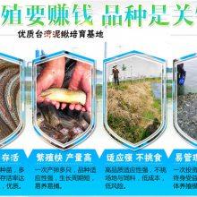 湖北振农生态农业发展公司振农9号泥鳅养殖泥鳅种苗多少钱一斤