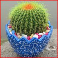 JSH春天空气盆开花小室内桌面盆栽组合仙人球彩色土净化四季可爱