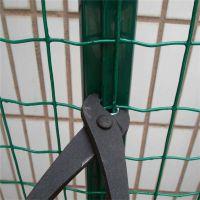 散养鸡围栏网 日照荷兰网 浸塑荷兰网厂家