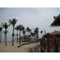 大型室内外热带仿真植物风景树 仿真椰子树 假椰树真树干仿真椰树