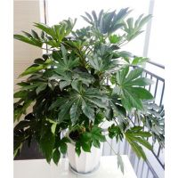 武汉单位办公室盆栽花卉出租,武汉单位绿植销售维护