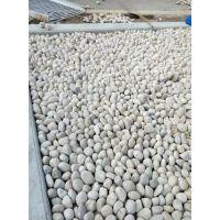 变压器鹅卵石 临沂雨花石 品质可靠 价格优惠