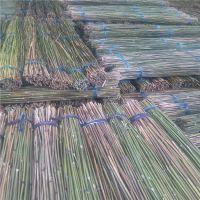 大量供应2.5米-4米干竹杆 江西发货 量大从优