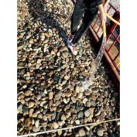 漯河大量天然鹅卵石滤料/变压器鹅卵石/水处理鹅卵石生产基地