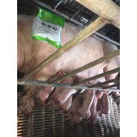 降低母猪保健肥猪育肥的养殖成本的方法之减少浪费