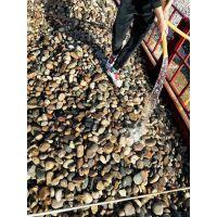 青岛鹅卵石/青岛鹅卵石相关商品信息