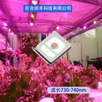 led2835植物灯珠0.2W 波长730nm 植物红光