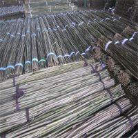 大量供应绑缚枸杞树苗用的3米4米小竹竿