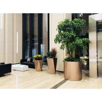 江浙沪办公室绿植养护租赁酒店家庭室内室外绿化