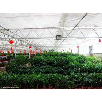 薄膜花卉市场/请问哪个地区生产薄膜温室大棚材料/山东青州鑫泽农业温室公司
