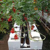 无土栽培技术培训种植技术培训有机栽培技术培训