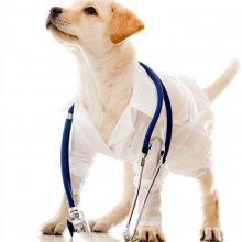 宠物医院-华爱宠物洗澡-猫咪宠物医院