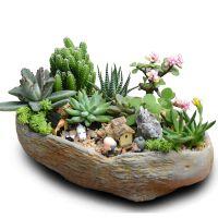 多肉植物桌面盆栽diy组合绿植肉肉新手套餐含盆创意室内微景观