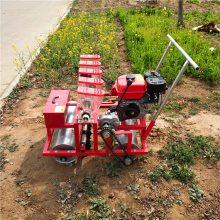 谷子播种施肥机 免间苗白菜播种厂家 蔬菜精量播种机