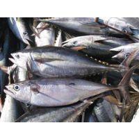 上海清关公司代理海鲜进口具体有哪些流程