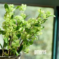 创意绿色精致仿真植物树枝插花装饰花筒花瓶客厅家居装饰翠峰果