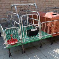 双体复合母猪产床怎么安装 母猪产仔栏尺寸 河北猪用床厂家