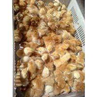 孵化场直销陕西九斤红公鸡苗|红玉鸡多少钱一斤|品种优良高存活率