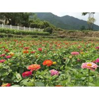 广西四季绿化花卉种子边坡常用草籽有哪些