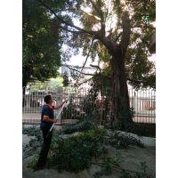 提供佛山大树木修剪、剪枝砍树、高空剪树锯树服务