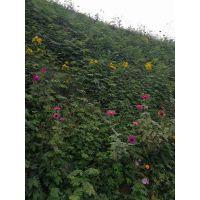 矿山植被恢复 客土喷播养护河南景绣客土喷播施工队