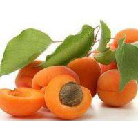 杏子树苗批发40公分3元,70公分4元,安徽润丰果树苗