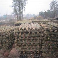 优质2.5米菜架竹批发 江西竹竿厂家发货
