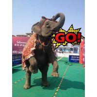 狮虎马戏团大型马戏表演环球飞车跨年暖场