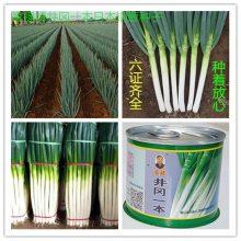 日本铁杆大葱种子 第一高产新品种 井冈一本 日本晚抽大葱种 井冈晚抽 日本冈葱种子