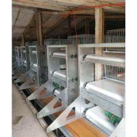 现货供应 生产优质蛋鸡笼 新款立式加粗热镀锌肉鸡笼