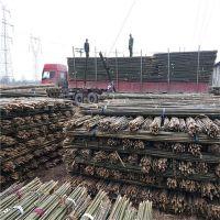 大量供应甘肃靖远、景泰绑扶枸杞树苗用的3米4米绑竿