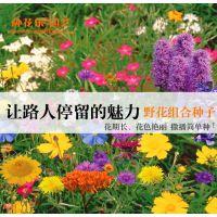 花草种子 四季种易活 花种子庭院波斯菊花 种多年生野花组合种子