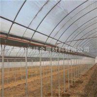 供应农业温室大棚 热镀锌钢管连体大棚(葡萄果树避雨棚)