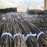 大量批发2.3米-2.5米细竹竿子 江西发货 汽运全国
