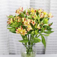 云南斗南鲜花市场齐开艳,花道花卉种植基地价格质量有保证