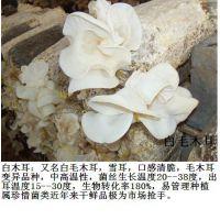 永腾高品质野生菌(图)-灵芝菌种植技术与供应-郑州灵芝菌种
