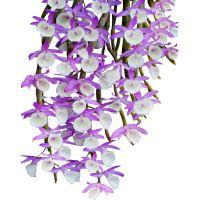 天外飞仙仿野生壁挂铁皮石斛苗绿植盆栽水培植物花卉庭院家居植物