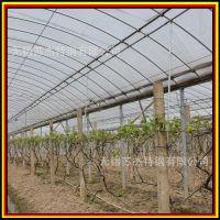 供应文洛式连栋温室 玻璃温室 智能温室 生态餐厅 寿光温室大棚
